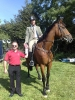 ss-09-paddy-orourke-on-tiny-3rd-working-hunter-presented-by-pat-mccartan-show-sec